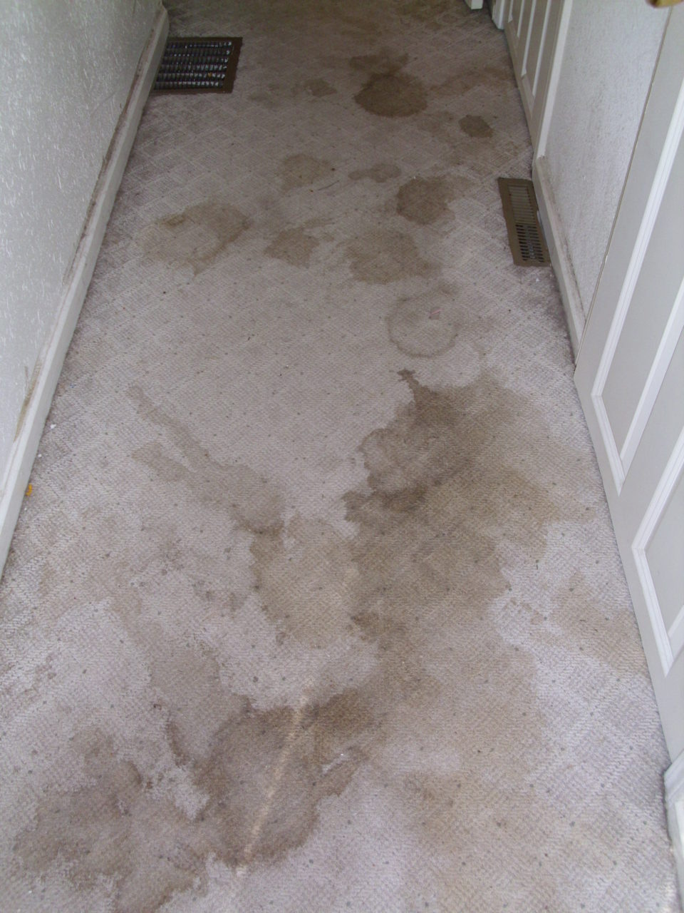 hallway with grungy stained carpet